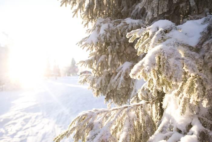 Slik pålegger du festevoks (finkornet snø)
